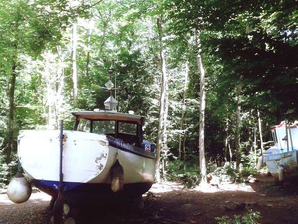 Art Exhibition Luke Jerram Boats⛵️ Climatechange Woods