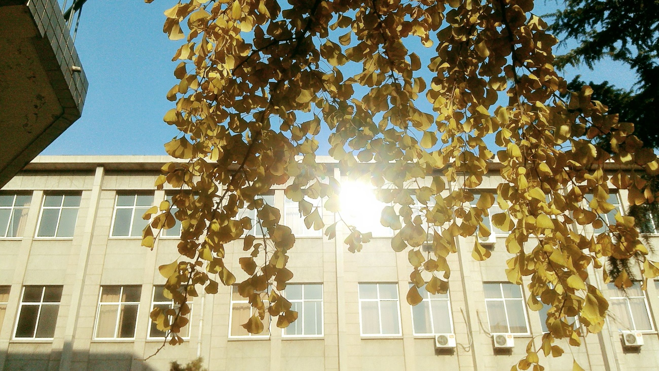 building exterior, architecture, built structure, window, tree, low angle view, residential building, sunlight, residential structure, building, growth, glass - material, balcony, city, clear sky, house, sky, branch, day, no people