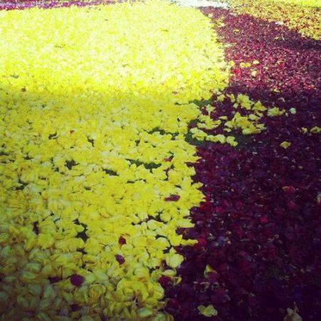 Kwiatki C: First Eyeem Photo