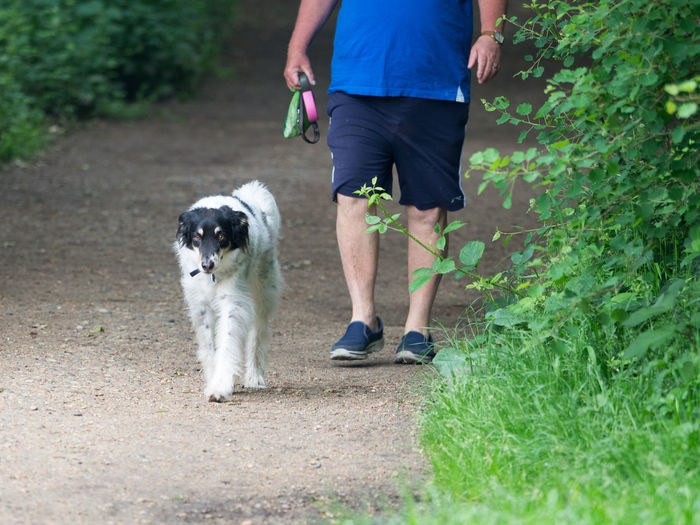 Walking the human Walking The Human Canine Day Dog Domestic Domestic Animals Grass Human Low Section Mammal One Animal One Person Outdoors Pet Owner Pets Plant Shorts Vertebrate Walking Walking The Dog Wimbledon Common