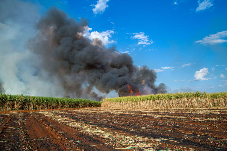 Fired Accidents And Disasters Air Pollution Burning Cloud - Sky Day Destruction Environment Environmental Issues Field Fire Fire - Natural Phenomenon Heat - Temperature Land Landscape Nature No People Outdoors Pollution Power In Nature Sign Sky Smoke - Physical Structure Sugar Cane Field