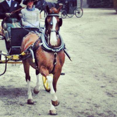 Tuigpaard Attacchi Venariareale Welovedrivingsport Combineddriving Fahrsport Sportkörning Drivingsport Pony Yourdailyhorses Equestrian Carriagedriving Attelage
