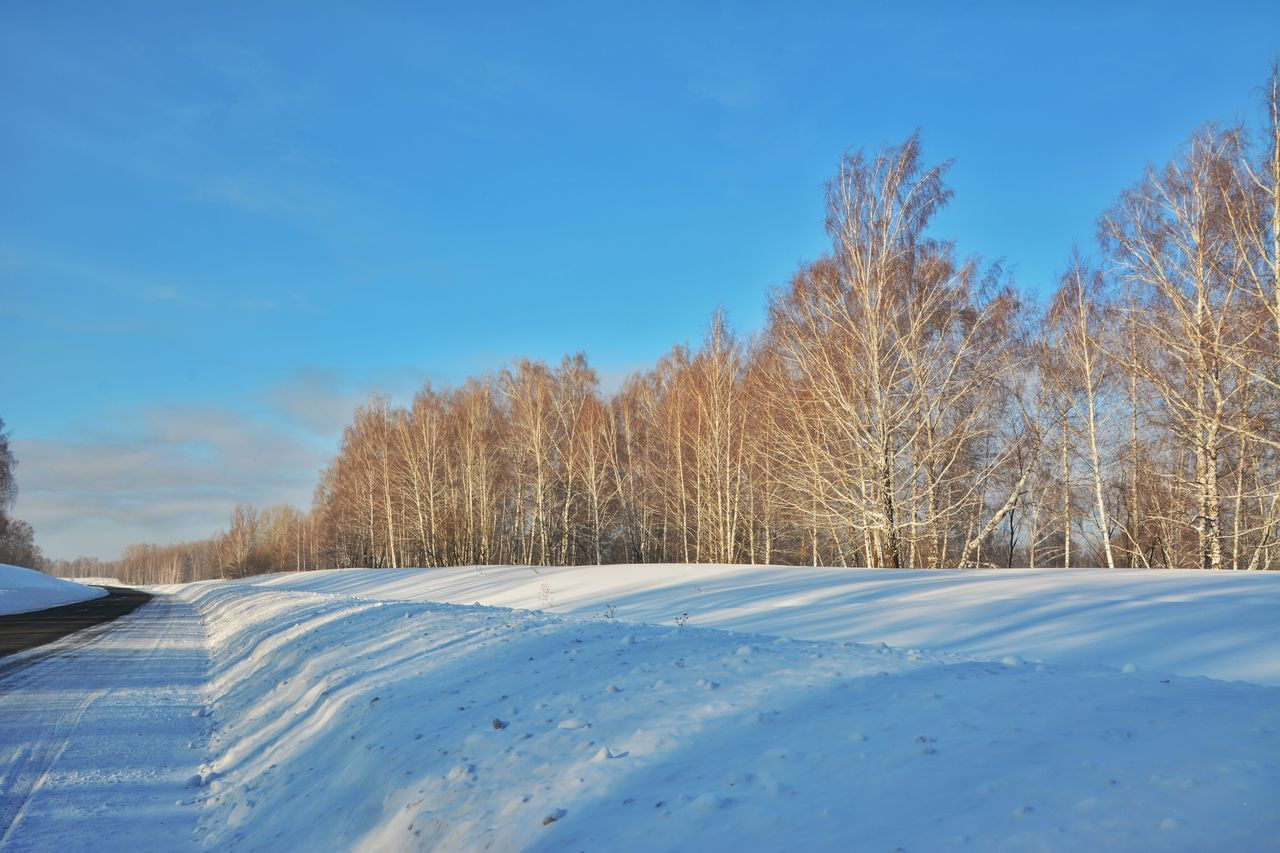 Trees On Snow Covered Field Against Blue Sky