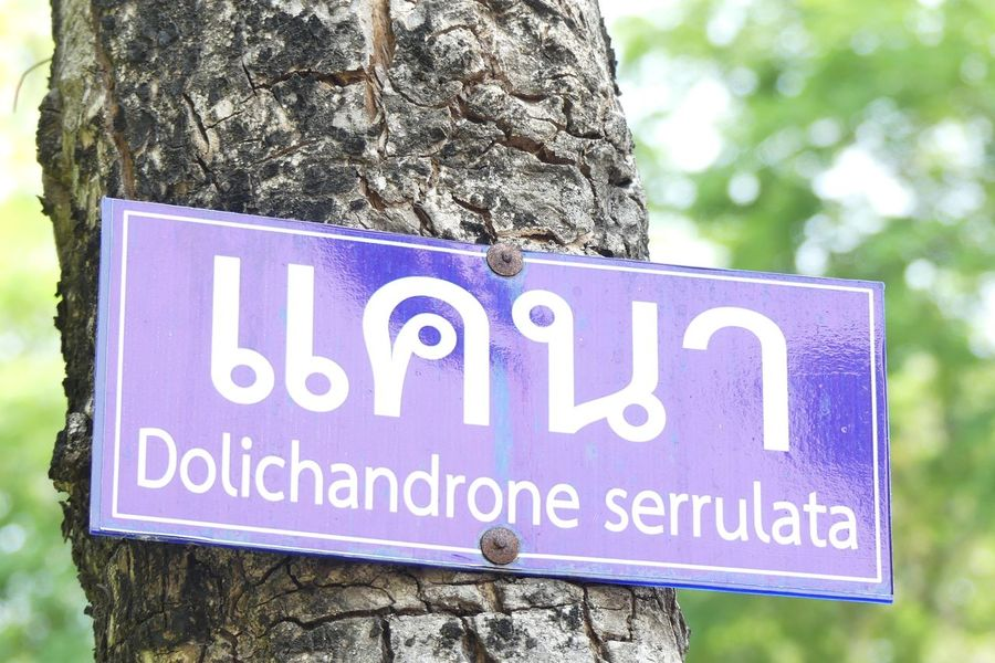 Tak,Thailand. April 24.2017 : Text label Dolichandrone Serrulata at Tak Public Library on April 24.2017. Blue Close-up Communication Day Focus On Foreground Nature No People Outdoors Text Text Text Box Text Label Tree Tree Trunk Western Script กล่องข้อความ ป้ายข้อมความ