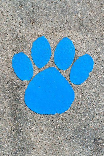 Blue animal print painted on concrete pavement Animal Paw Blue Cat Paw Print Day Dog Paw Print FootPrint Heart Shape High Angle View Love Multi Colored No People Outdoors Painted Image Pattern Street