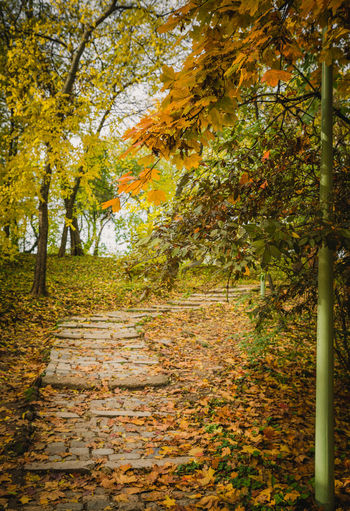 Autumn day in Carol park, Bucharest, Romania Stairs Alley Autumn Book Cover Branch Cover Day Landscape Leaf Leaves Multi Colored Nature No People Outdoors Plant Tranquil Scene Tranquility Tree Yellow
