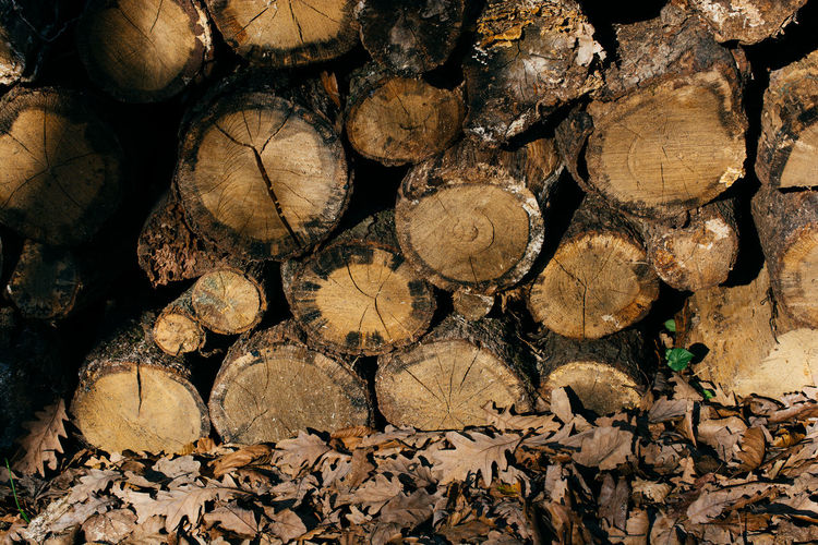 Background Brown Cut Design Environment Firewood Forest Forestry Industry Log Logging Logs Lumber Material Natural Nature Old Pattern Pile Round Rural Stack Stump Texture Timber Tree Trunk Wall Wood Wooden