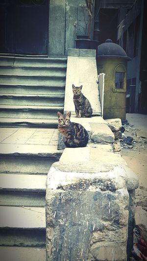 Partners in crime. Cairo Catsoftheworld No People Day Downtown Egypt Egyptiancat Cats Of EyeEm Catoftheday Cat
