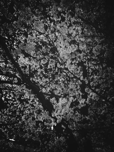 Wood Park Sakura Hanami