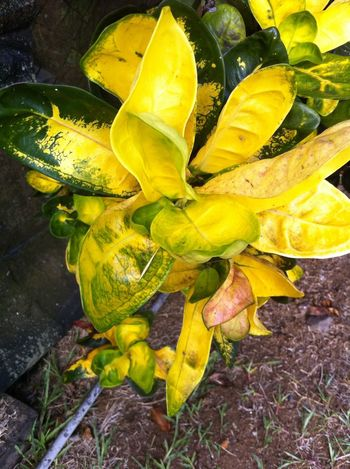 Taking Photos Sucre Et Piments Guadelpupe Fleurs Guadeloupe Hello World Check This Out Canelle Enjoying Life