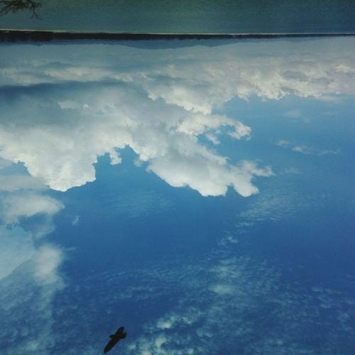 upside down beachview Malaysia BeachViews Cherating Pahang Cheratingbeach Bird Sky EyeEmNewHere Be. Ready.