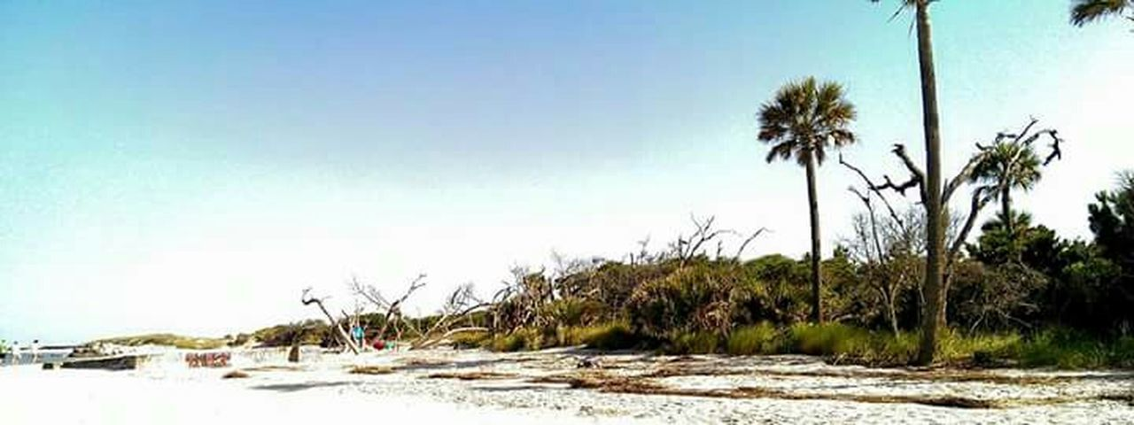 hanging out on Folly Beach Ocean South Carolina Beach Sand Tree The KIOMI Collection