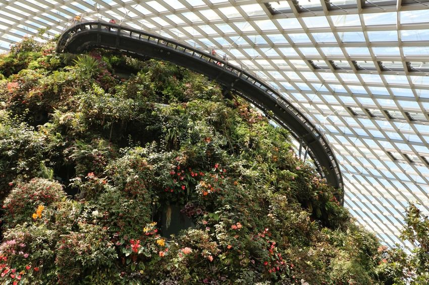 Growth Plant Architecture No People Tree Greenhouse Day Nature Indoors  The Purist (no Edit, No Filter) Treetopwalk Cloud Forest Real People Cloud Forest Dome Travel Destinations Miniature Travel Plant Singapore EyeEmNewHere 3XSPUnity Gardens By The Bay Break The Mold Outdoors Growth Sun's lightbeam + Cloud Forest = 📸