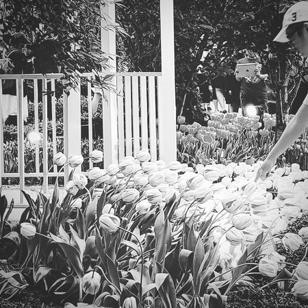 Tulips Tulipmania Spring Flowers Flowerdome Gardens By The Bay Sg_streetphotography Streetphotography Bnw_streetphotography Bnw_sg Bnwphotography Singapore