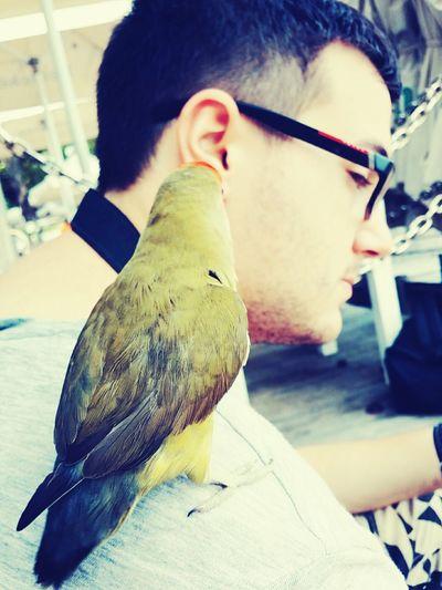 Animals Birds Of EyeEm  Birds Pets
