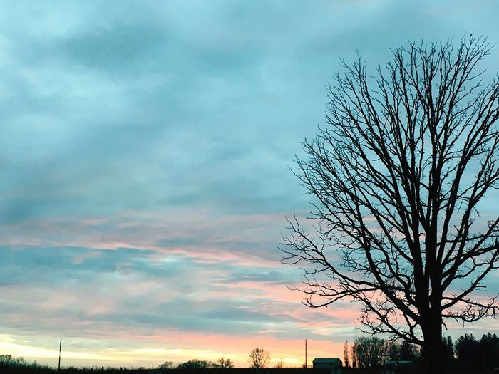 Sky Tree Bare Tree Cloud - Sky Beauty In Nature Nature Scenics Tranquility Tranquil Scene Outdoors Silhouette No People Branch Sunset Day