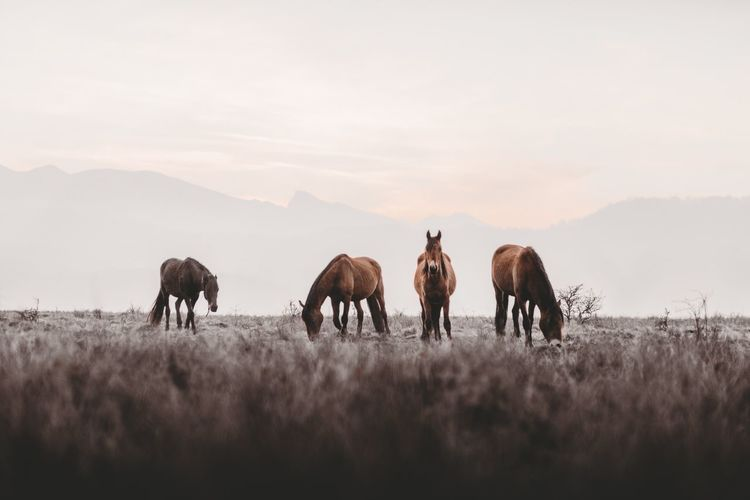Horses Animal Themes Animal Sky Group Of Animals Mammal Mountain Animal Wildlife Plant Nature Animals In The Wild Field Land Beauty In Nature Domestic Animals Scenics - Nature Outdoors Day No People Vertebrate Environment Visual Creativity