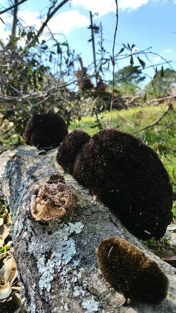 • Fungi on Fallen Tree • Fallen Tree Wind Damage Nature Fungi Growth Alabama Close-up Fungus