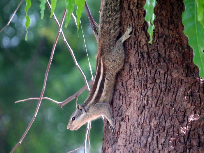 Squirrel Eye Em