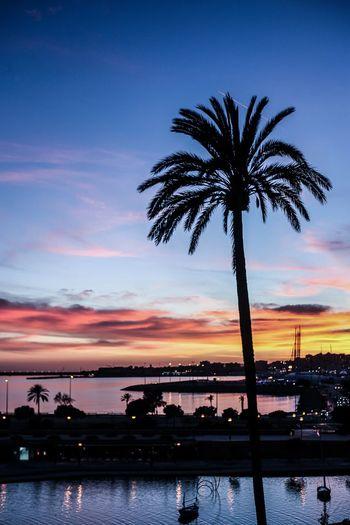 palmtree Tree