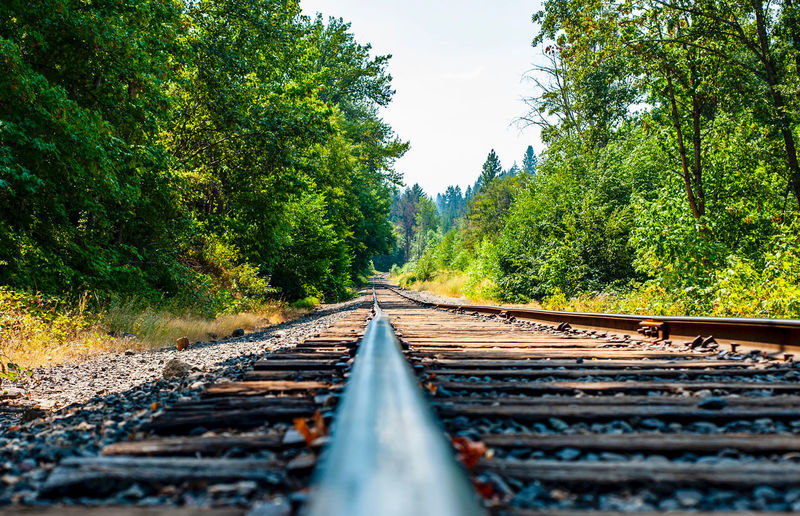 Surface level of railroad track along trees