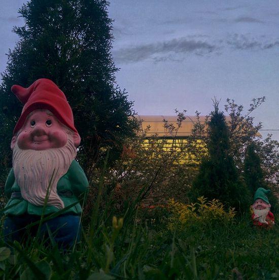 Russia Dwarves Dwarf Green Nexus5 Composition Macro Photography
