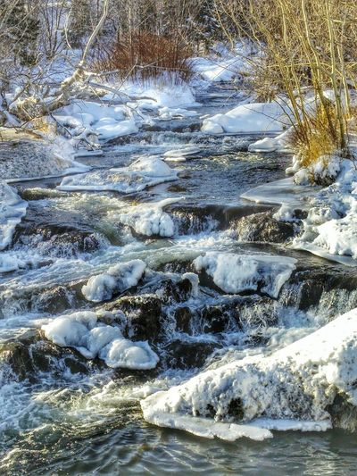 River Nature Origins Ice Snow Water Cold Sunset Trees Surrounded By Nature Winter Warmth Melting Ice Canada Cold And Sunny