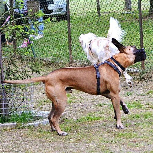 Shake Your Body Domestic Animals Dog Animal Themes Pets Day Outdoors Full Length EyeEmBestPics EyeEmBestEdits EyeEm Masterclass EyeEm Market © EyeEm Best Shots Nikkor 55-300mm Lens Nikon D5200