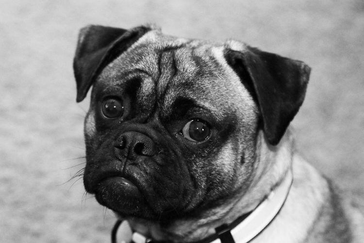 Jug Dog Pets