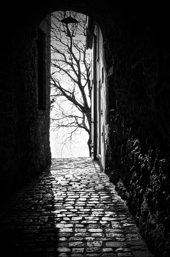 Architecture Building Built Structure No People Day The Way Forward Direction Nature Tree Wall - Building Feature Sunlight Cobblestone Wall Plant Window