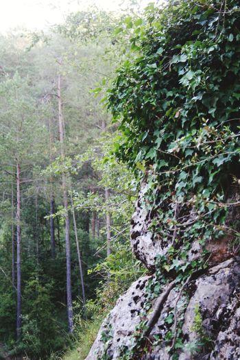 exploring Tree