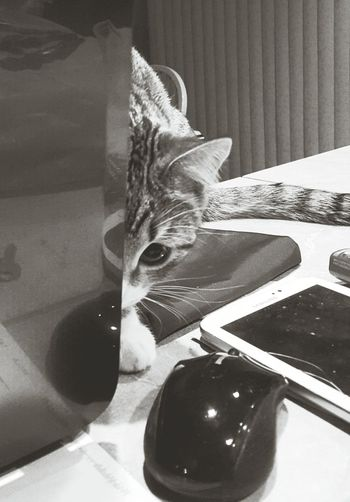 Cat & Mouse Cat Mouse Animals Technology