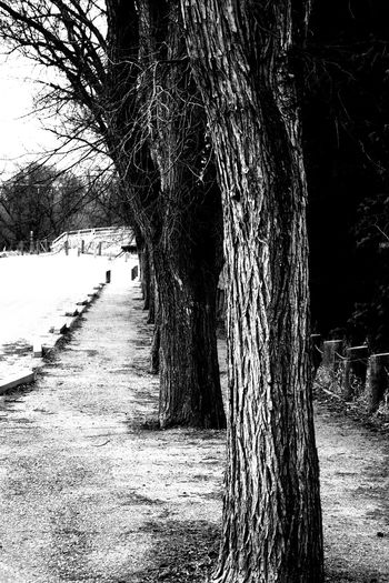 Trees Straight