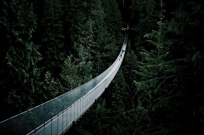 Feel Alone Monkey Bridge Nature