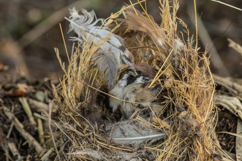 Bird Vertebrate Animal Young Bird Animal Nest Bird Nest No People One Animal Plant High Angle View Outdoors Mouth Open Animal Family