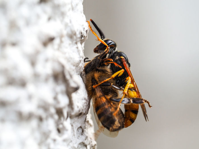 Jeans Brown Photography - Animal - Nature Animals In The Wild Bee Vs Fly Bee 🐝 Fight Jeans Brown Photography Nature Nature Photography Animal Animal Themes Animal Wildlife Animals Animals In The Wild Bee Close Up Close-up Day Insect Nature Nature_collection No People One Animal Outdoors