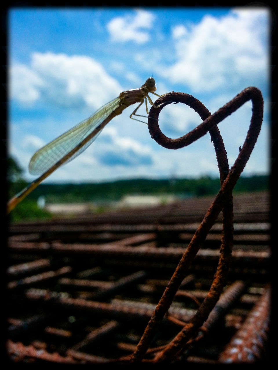 rusty, focus on foreground, no people, close-up, outdoors, day, nature, sky