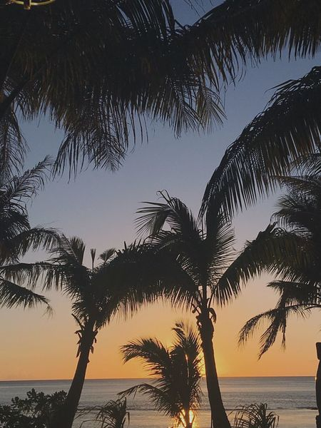 Sunsets of Guam First Eyeem Photo Sunset Palm Trees Let's Go. Together. Sommergefühle