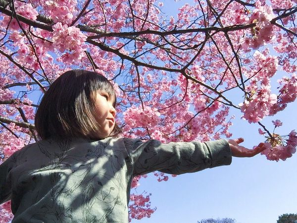 EyeEm Tokyo MeetUp 12 Hello My Baby Cherry Blossoms Sakura2016 Sakura Urban Spring Fever Taking Photos EyeEm Nature Lover VSCO Vscocam Spring EyeEm Porto Portrait