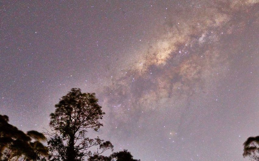 Astronomy Tree Star - Space Night Space Plant Low Angle View Galaxy Outdoors Nature Star Star Field Beauty In Nature