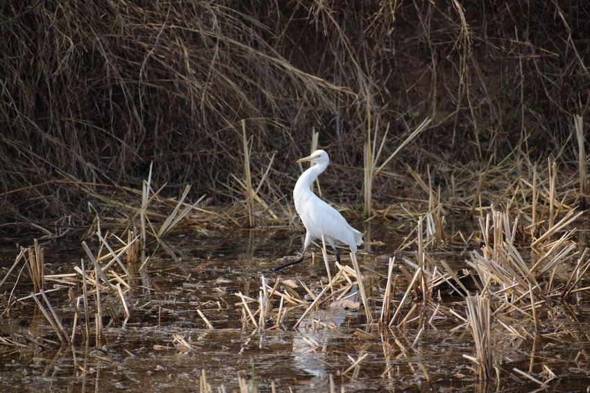 Fliying Birds Birds Freedom Water Bird Walk
