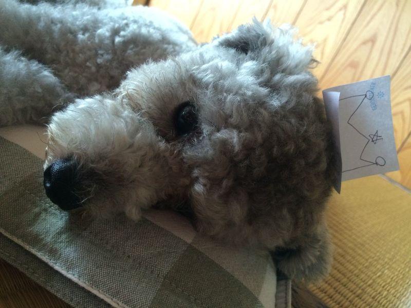 Pets Corner Sleepydog Noël Cute Pets Ilovemydog My Toypoodle Toypoodle Funny Sweet♡ Prince