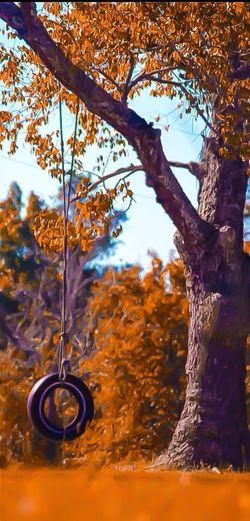 Fallrees] fall