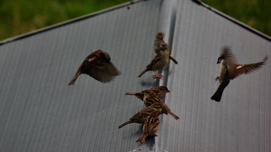 High angle view of birds flying