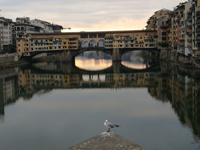 Seagull perching on wall at ponte vecchio