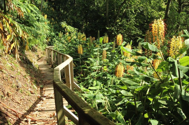 Wooden Walkway Railing Plant Growth Nature Green Color Tree Day Sunlight