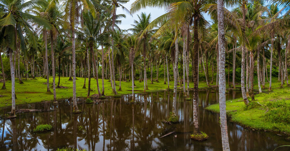 Palm tree forest on Siargao Island Grass Green Nature Philippines Pond Reflection Scenic Travel Beauty In Nature Forest Idyllic Lake Landscape Meadow Palm Trees Travel Destinations