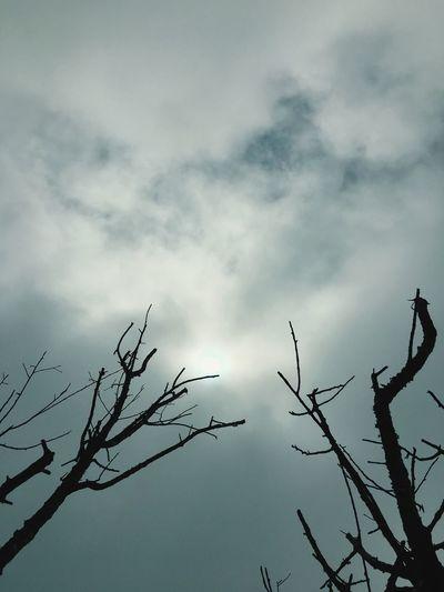 Sky Cloud - Sky Tree Low Angle View Plant Nature No People