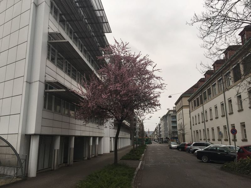 Architecture Building Building Exterior Built Structure Car City Day No People Outdoors Road Sky Spring 2015 Street Tree Urban