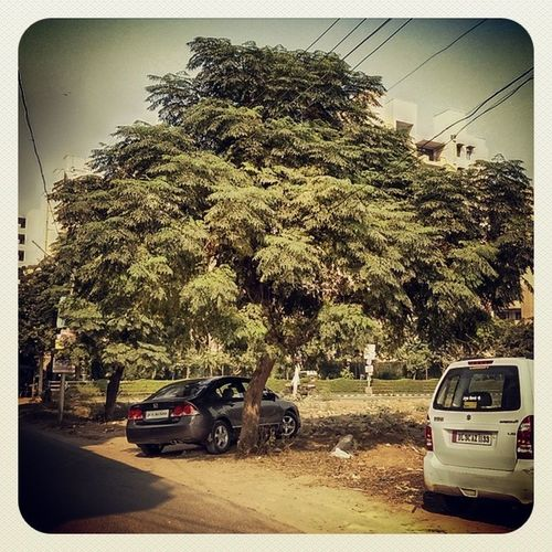 In search of shade Tree Nature Hot Weather Car Honda Civic Leaves Vehicle Maruti